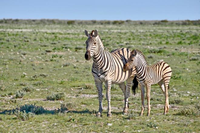 Dia 76 Parque Nacional Etosha 25 Fev77