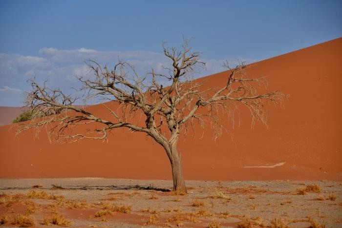 Duna 45 (Namib Naukluft Park)